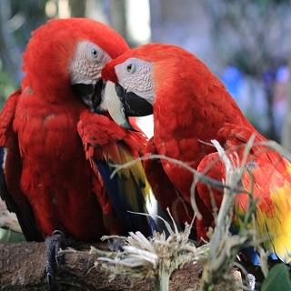 macaw-