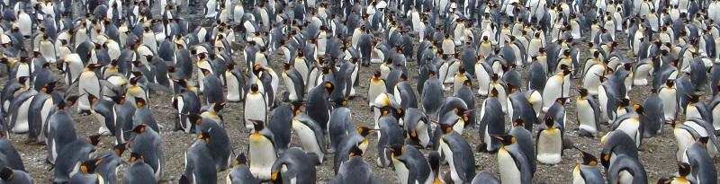 antarctica-wide