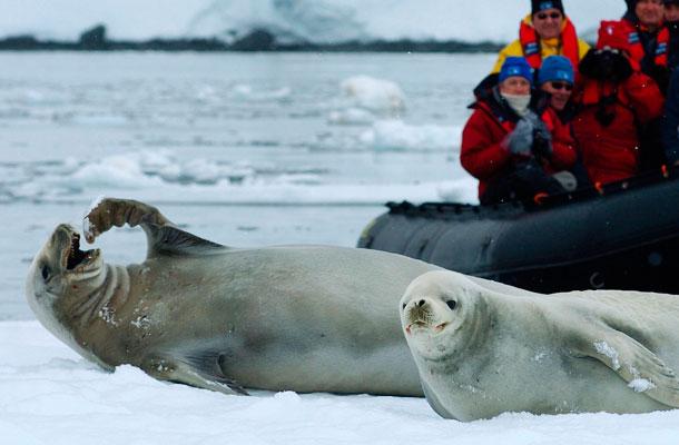 antartika-page