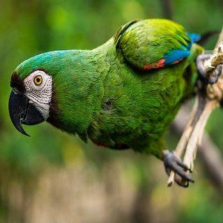 BIRD EXOTIC ECUADOR