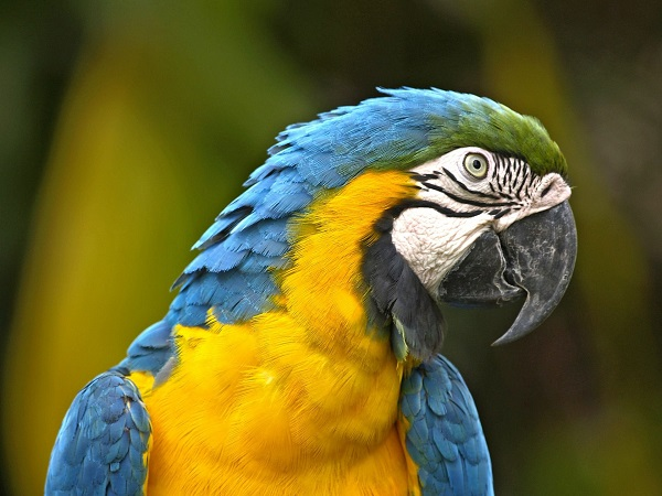 טיול מיוחד לברזיל בדגש טבע
