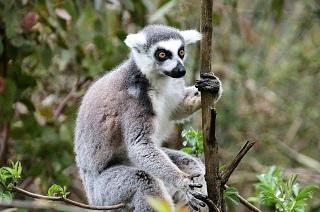 טיול פרטי למדגסקר