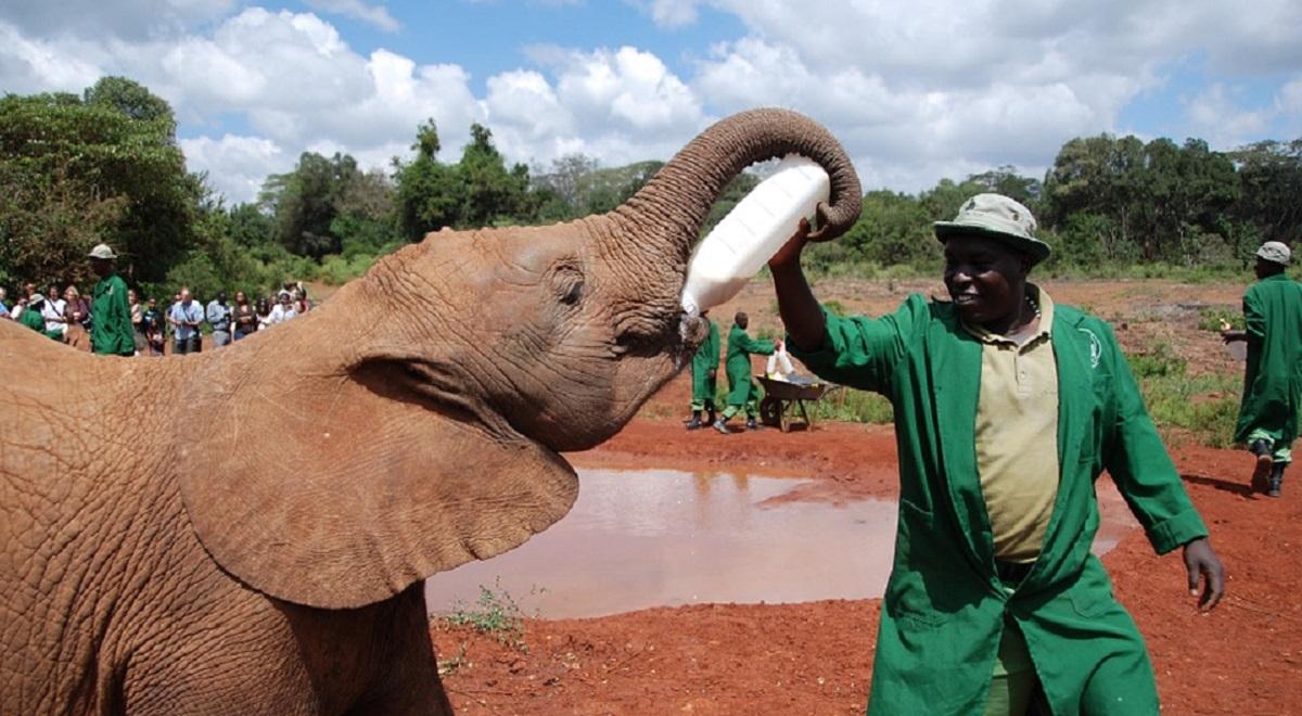 קניה - הפילים שותים