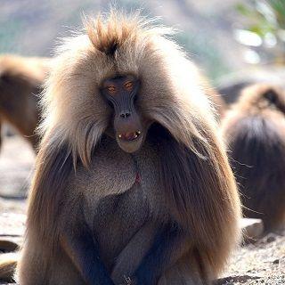 בעלי חיים בטיול לאתיופיה